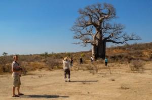 Riesen-Baobab während Madagaskar Reise