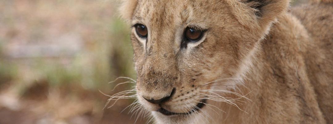 Species_conservation_CFN_MartinaTrinkel