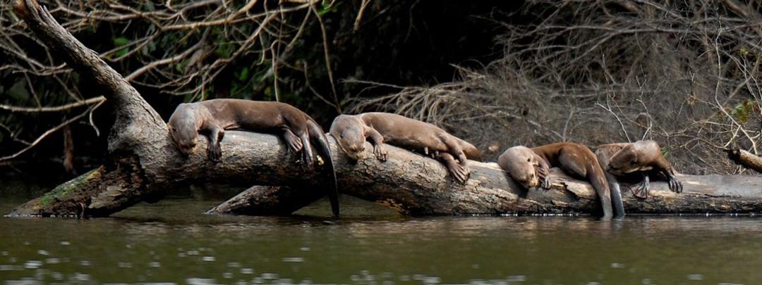 species_conservation_MaribelRecharte