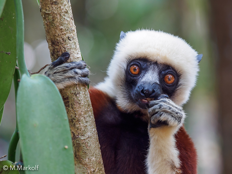 Photo exhibition at Affenberg Salem about the diversity and conservation of Primates