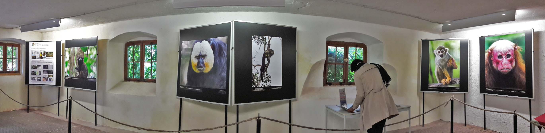 Ausstellung zur Vielfalt der Primaten am Affenberg Salem- Chances for Nature