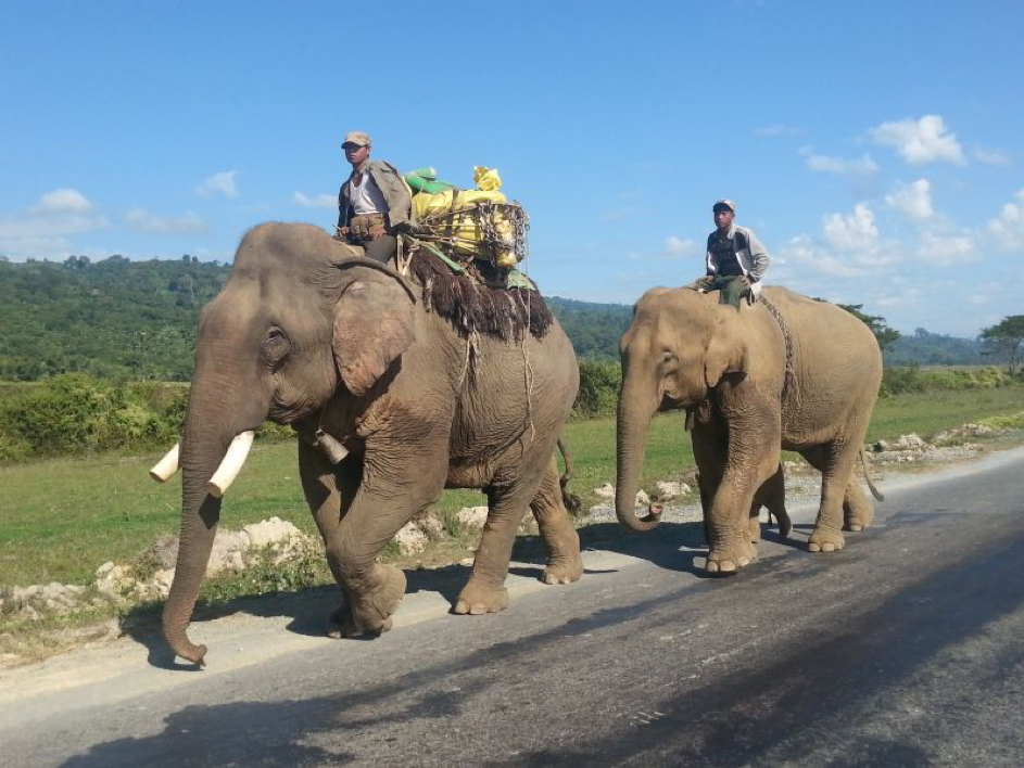 Management and welfare of working elephants at Indawgyi Lake