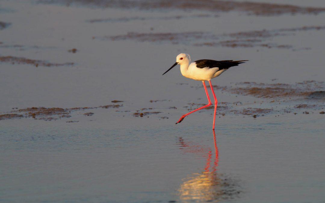 Publikation über Wasservögel in den Mangroven Menabes