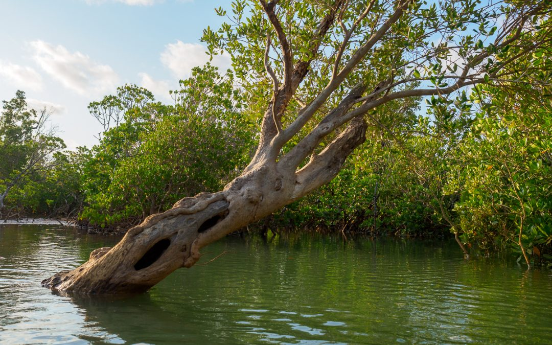 A new method for mangrove status assessment