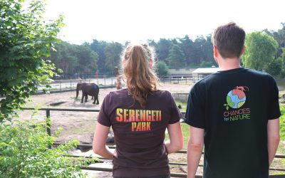 Erfolgreicher Infraschall-Test mit Elefanten im Serengeti-Park Hodenhagen