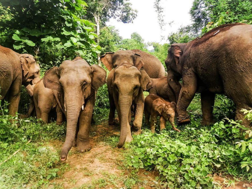 Chances for Nature | Elefantenbabys in Myanmar