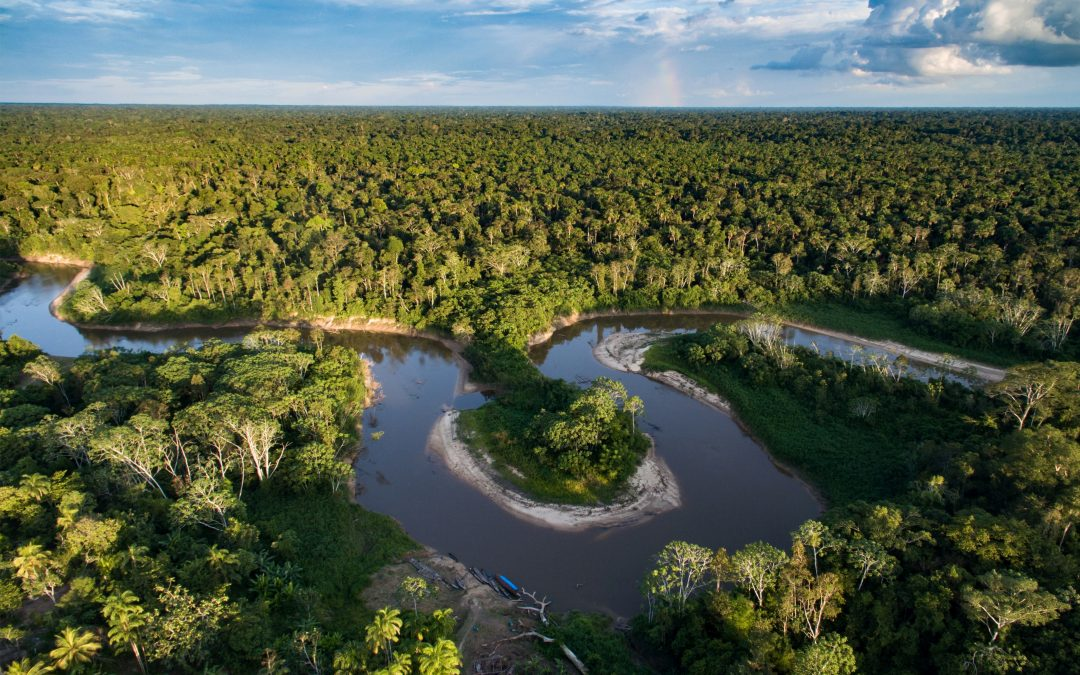 Wildlife monitoring in the Peruvian Amazon rainforest with our support