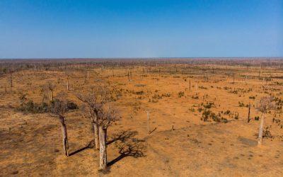 Waldbrände: Der Kirindy-Wald in akuter Gefahr